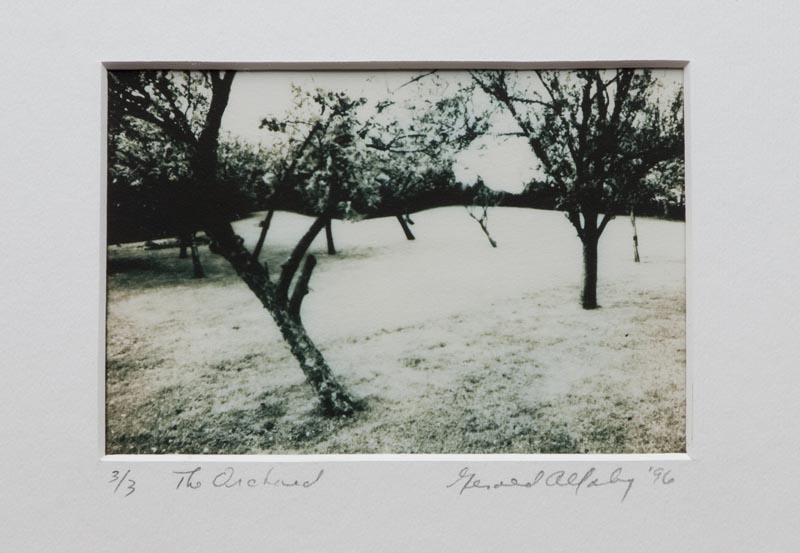 The Orchard, Gerry Allaby, photograph